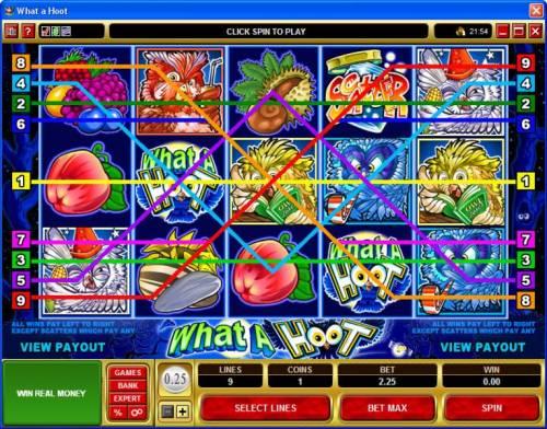 What a Hoot review on Big Bonus Slots